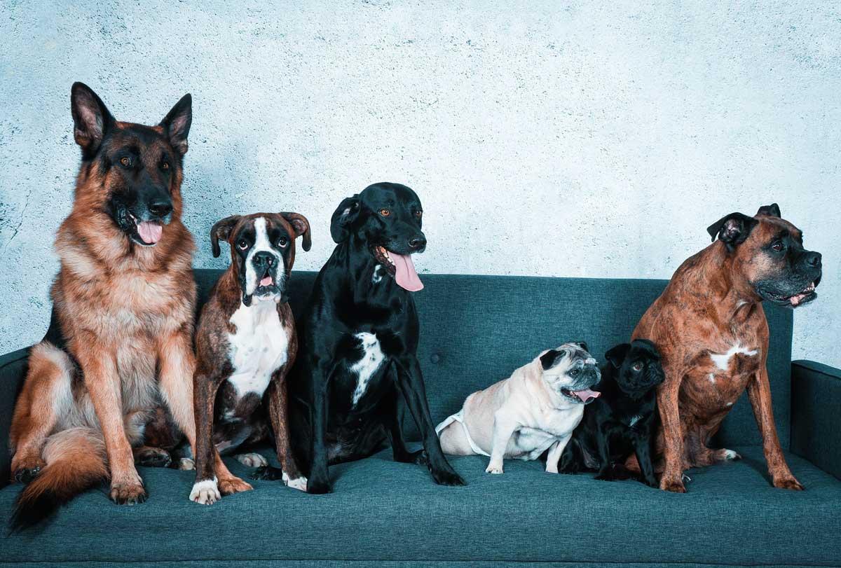Hundegruppe_Sofa-blau-web
