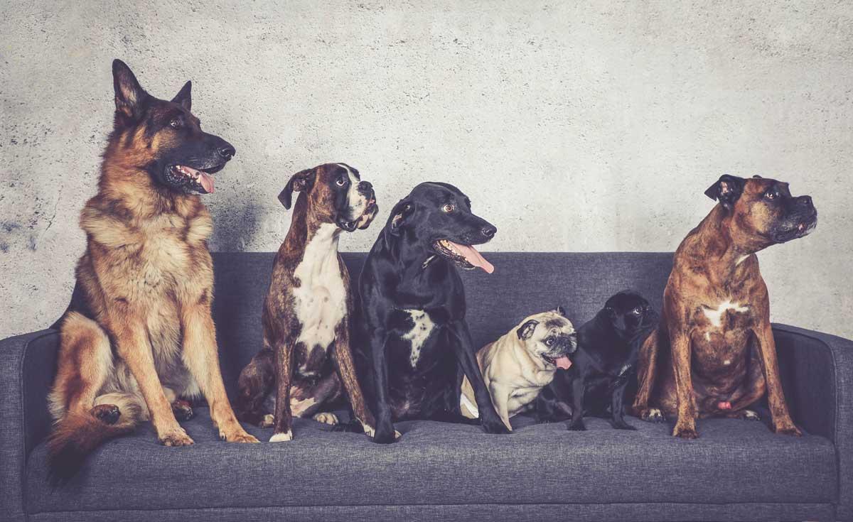 tierarztpraxis-radev-muenster-Hundegruppe_Sofa-web