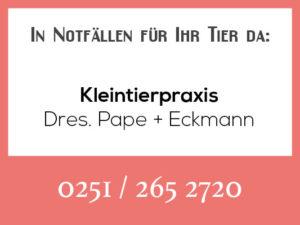 Tierarztpraxis Pape + Eckmann - Rufbereitschaft @ Kleintierpraxis Dres. Pape / Eckmann