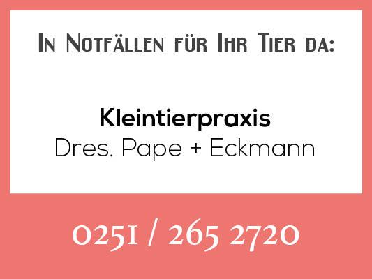 Notdienstkalender_Profilbild-pape-eckmann